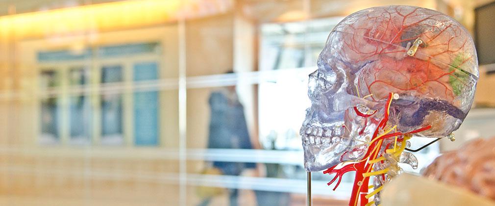 cranio chirurgia maxillo facciale